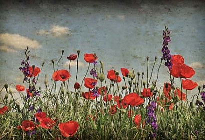 Fototapeta Poppies 6423