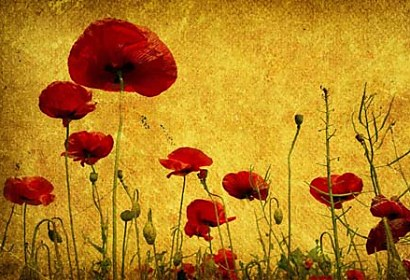 Fototapeta Red Poppies 6319