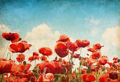 Fototapeta Poppies Flowers 6738