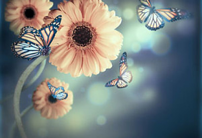 Fototapeta Flowers and Butterflies 4637