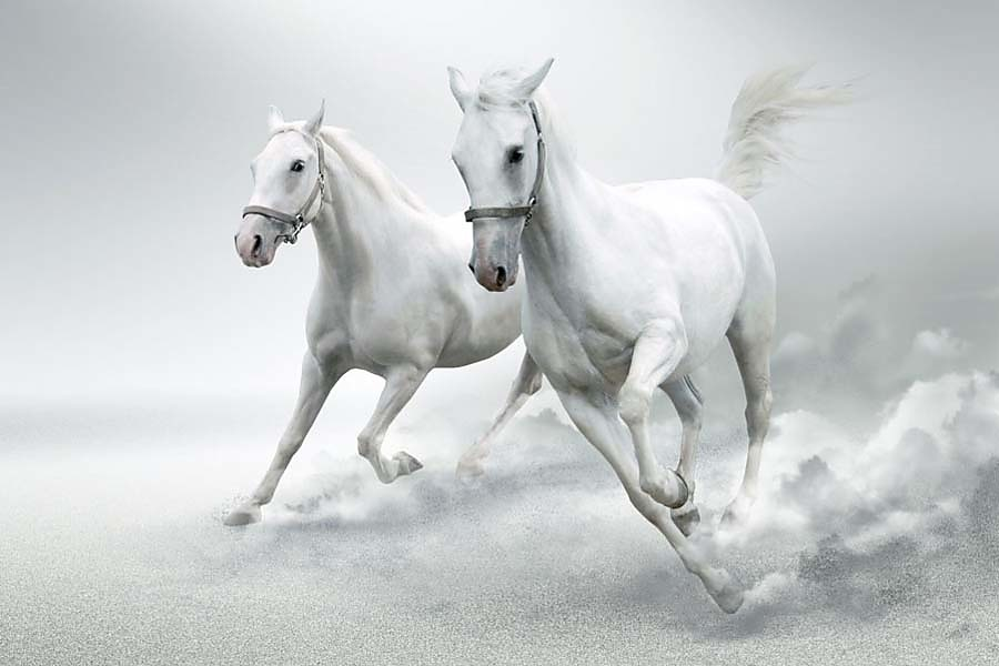 images of horses in black and white - photo #43
