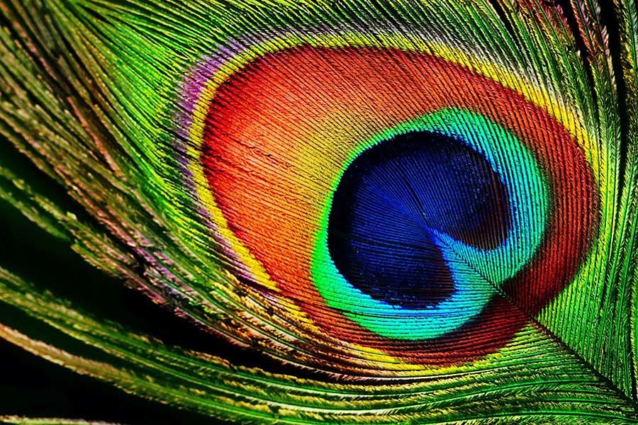 ᐈ Перья птиц фото   rudepositphotoscom
